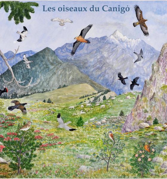 Aquarelle dépliant oiseaux du Canigó / S. Nicolle